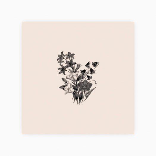 carte merci botanique