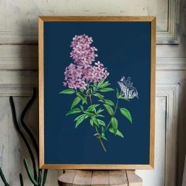 Affiche vintage botanique